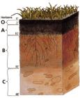 220px-soil_profile